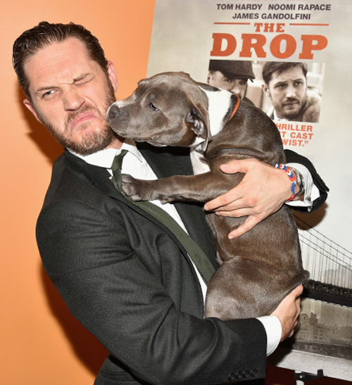NEW YORK, NY - SEPTEMBER 08:  Tom Hardy and Zora the dog attend
